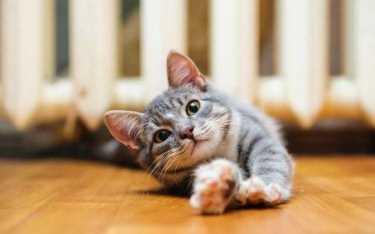 Кошки понимают по глазам